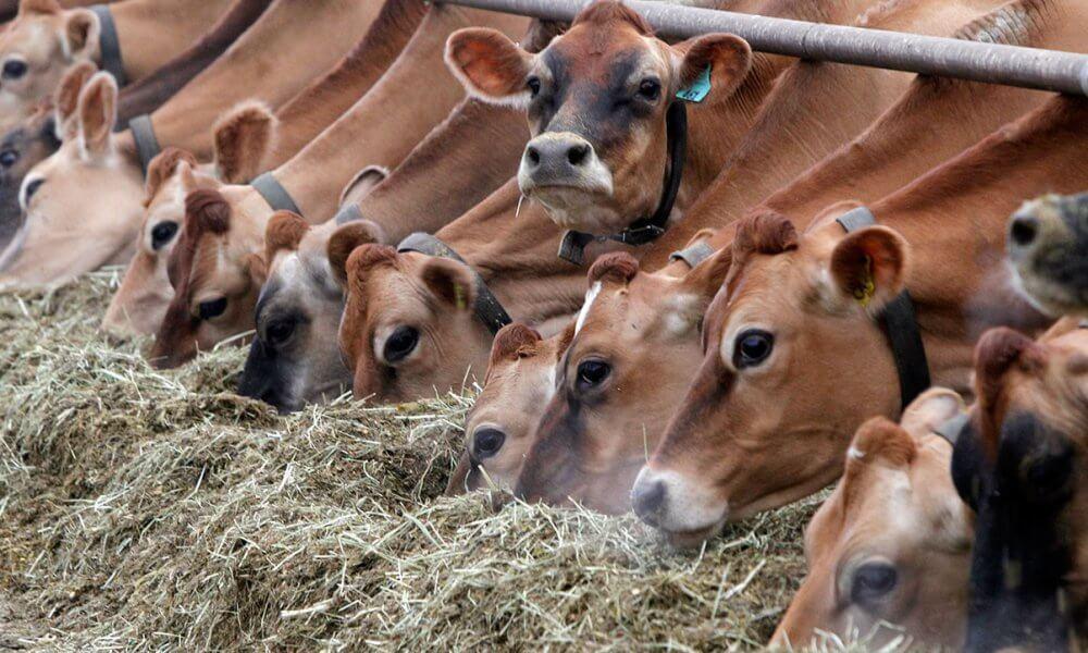 Прибыльность животноводческого бизнеса