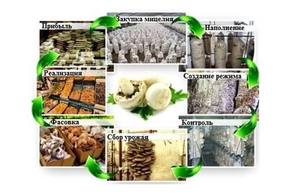 Вешенки выращивание в домашних условиях как бизнес