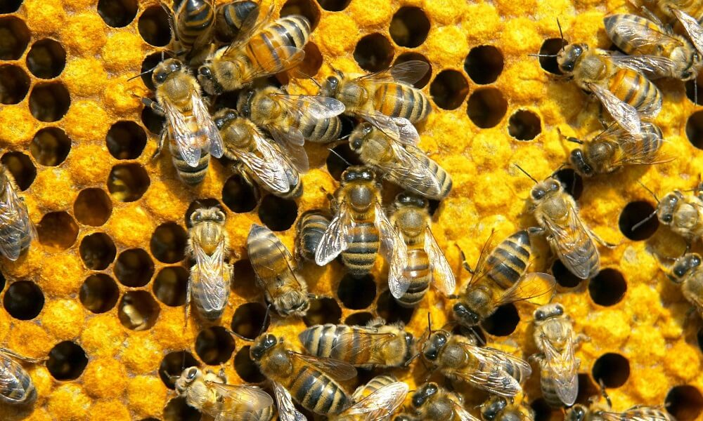 Поэтапный бизнес план пчеловодства и рентабельность дела