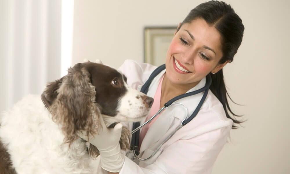 Как открыть ветеринарную клинику: бизнес план