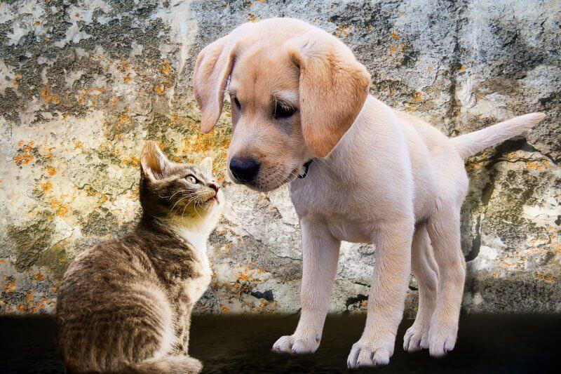 Как экономить на домашних животных?