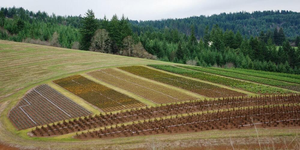 Как открыть фермерское хозяйство?